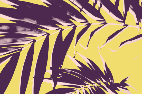 A graphic purple and yellow image of palm leaves